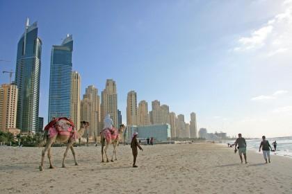 Kamel på stranden i Dubai (Foto: Göran Ingman)