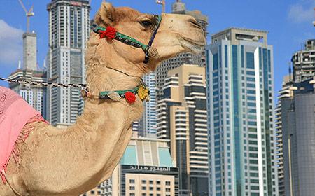 Apollo startar direktcharter till Dubai