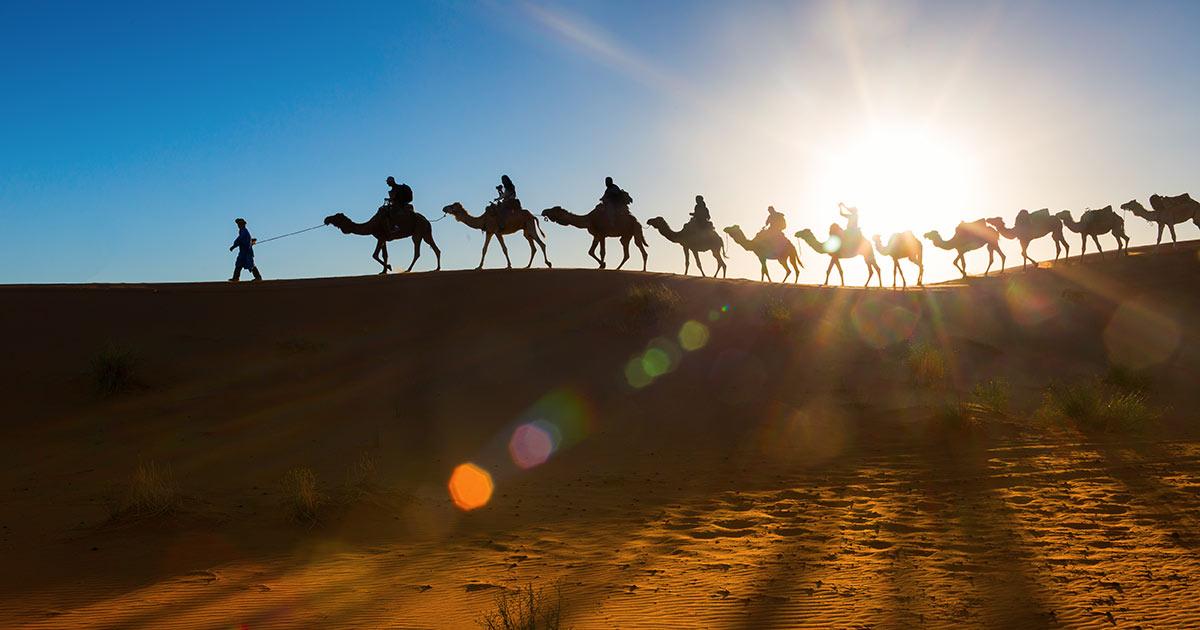Kamelsafari i Dubai